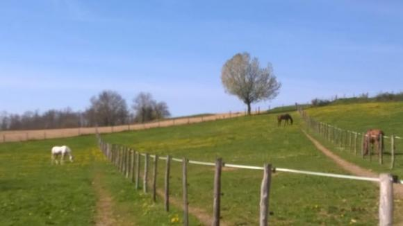 pension box / paddock pour chevaux bourgoin la tour du pin
