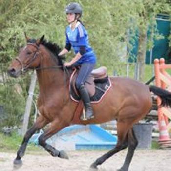 cours de cheval la tour du pin bourgoin vignieu