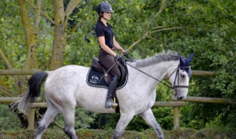 travail du cheval dressage coaching equitation