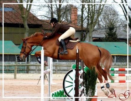 Pension pour chevaux Vignieu