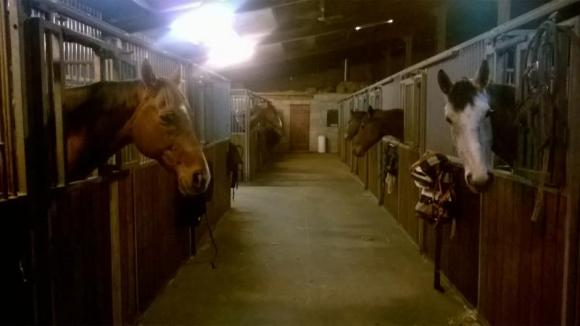 pension box / paddock pour chevaux vignieu